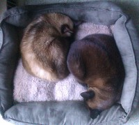 A Yin-Yang Snooze